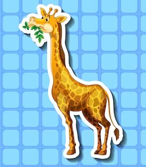 Gira girafa mastigando as folhas