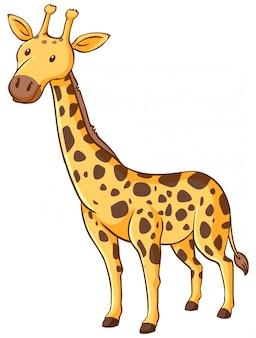 Girafa bonitinha em pé no fundo branco