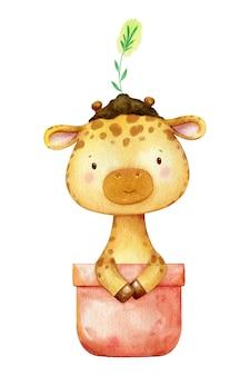 Girafa em aquarela, sentado em um vaso de flores com uma planta na cabeça. ilustração humorística de crianças isolada