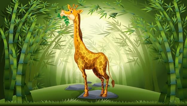 Girafa na floresta de bambu