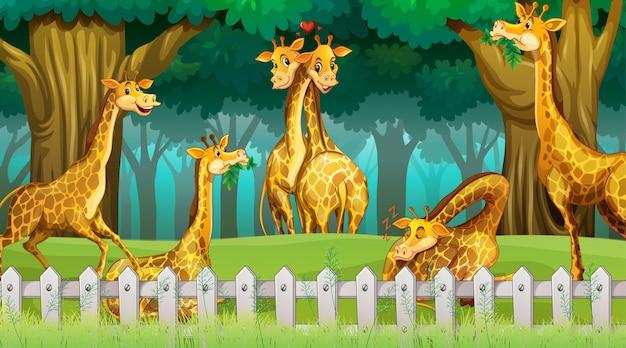 Girafas em cena de madeira
