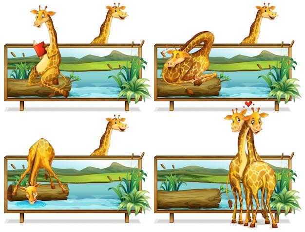 Girafas nos quadros de madeira