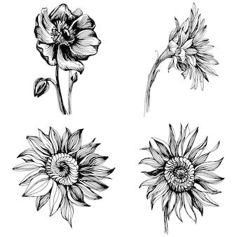 Girassóis definir elementos. flor botânica floral. elemento de ilustração isolado. mão desenhando flores silvestres