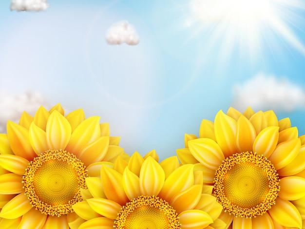 Girassol com céu azul