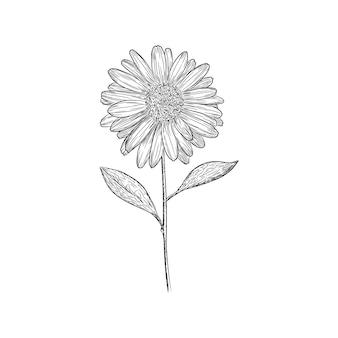 Girassol, ilustração vetorial, desenho