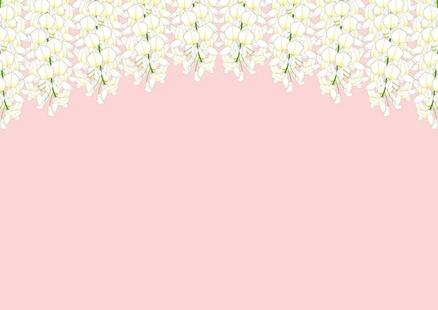 Glicínias brancas isoladas no fundo rosa com espaço de cópia