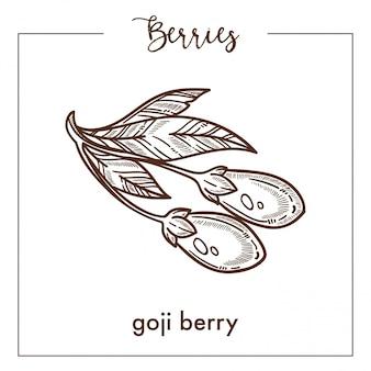 Goji berry na haste curta com esboço monocromático de folhas de sépia