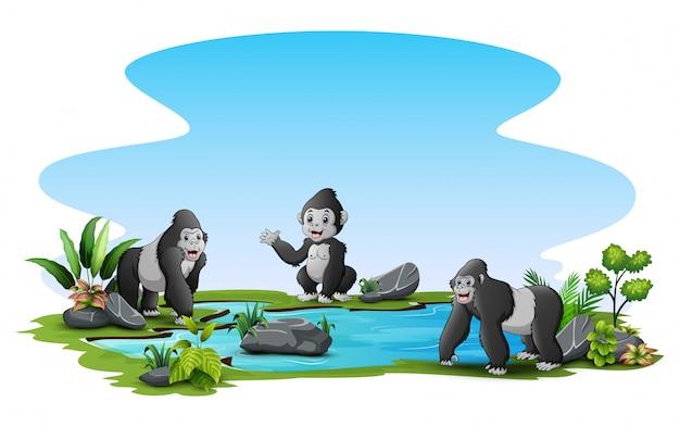 Gorilas ao redor do pequeno lago