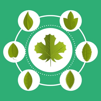 Gráfico de ecologia de folhas e folhas