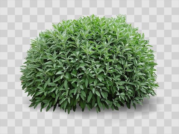 Gráficos vetoriais 3d. esfera de planta realista em forma de arbusto em gramado verde