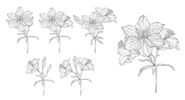 Gráficos vetoriais de uma composição floral com lírios de flores