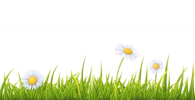 Grama com flores brancas fleabane
