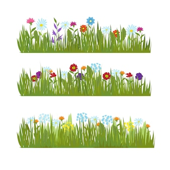 Grama de verão com fronteiras de flores lindas selvagens