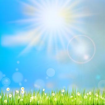 Grama de verão na luz do sol e céu desfocado no fundo.