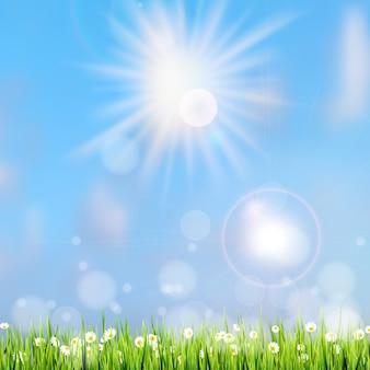 Grama de verão na luz do sol.