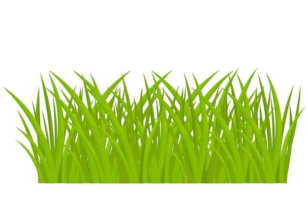 Grama verde de desenho animado em estilo cartoon, isolado no fundo branco