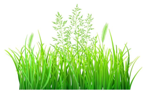 Grama verde e espiguetas
