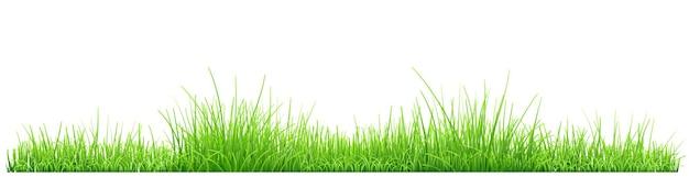 Grama verde isolada no fundo branco. ilustração vetorial