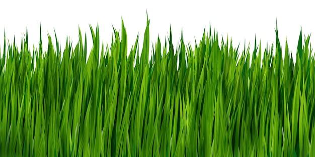 Grama verde realista isolada no fundo branco. borda vetorial, ilustração