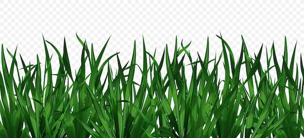 Grama verde realista
