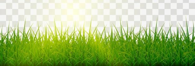 Gramado. gramas png, gramado png. grama verde jovem com brilho do sol.