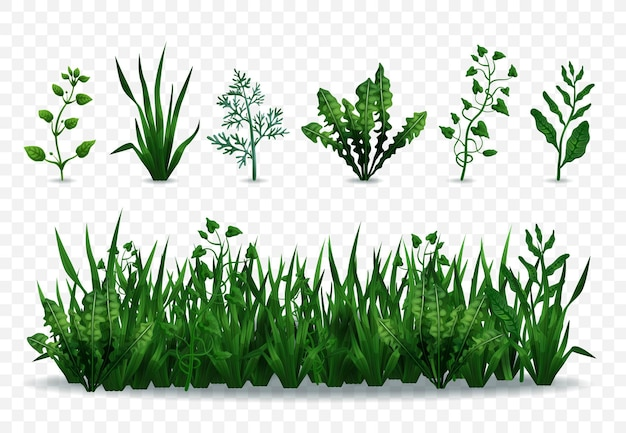 Gramíneas verdes frescas realistas e plantas isoladas em ilustração de fundo transparente