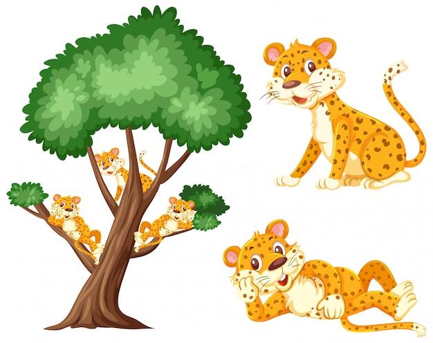 Grande árvore com tigres nos galhos em branco