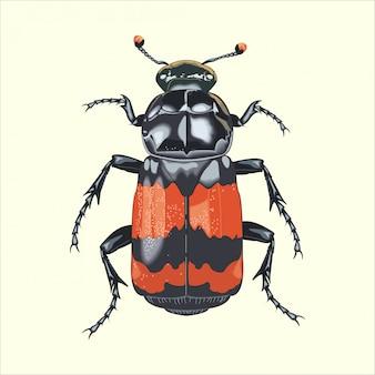 Grande besouro de insetos