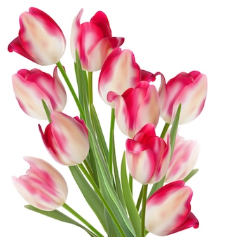 Grande buquê de tulipas em um branco.