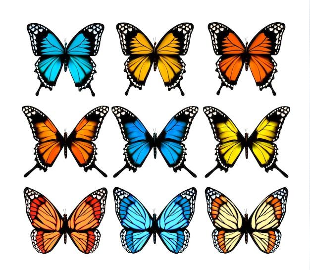 Grande coleção de borboletas coloridas