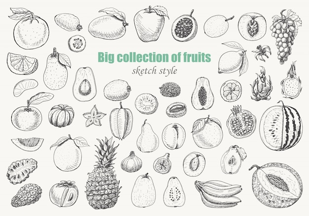 Grande coleção de frutas