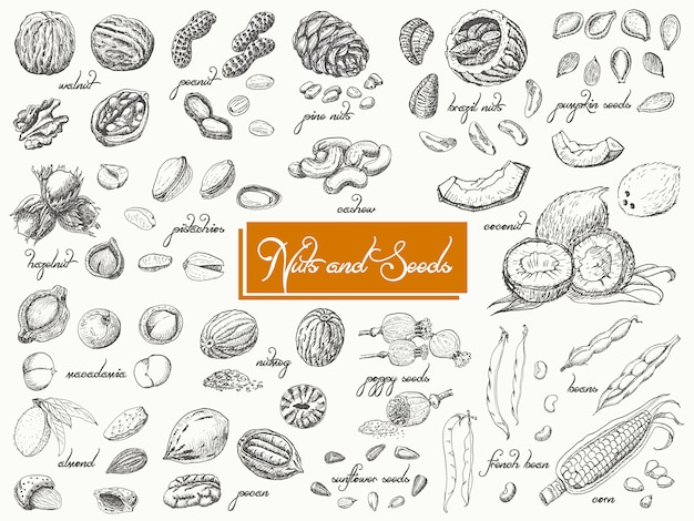 Grande coleção de nozes e sementes isoladas