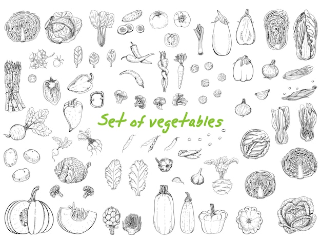 Grande conjunto com legumes em estilo de desenho