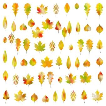 Grande conjunto de 60 folhas de outono coloridas.