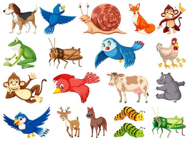 Grande conjunto de animais selvagens no fundo branco