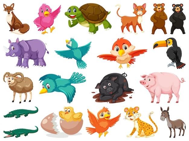 Grande conjunto de animais selvagens