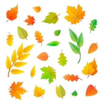 Grande conjunto de giros folhas de árvores diferentes
