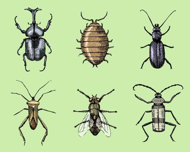 Grande conjunto de insetos insetos besouros e abelhas muitas espécies em xilogravura de ilustração gravada vintage mão desenhada estilo
