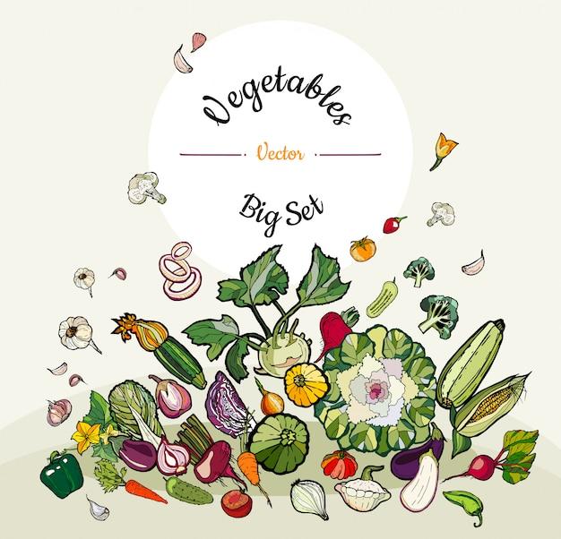 Grande conjunto de legumes coloridos mão desenhada hipster