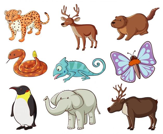 Grande conjunto de vida selvagem com muitos tipos de animais e insetos