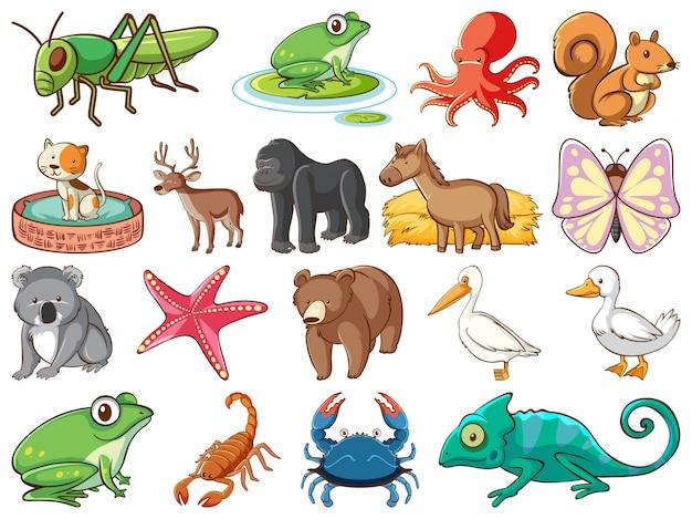 Grande conjunto de vida selvagem com muitos tipos de animais