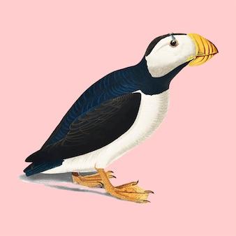 Grande ilustração de puffin