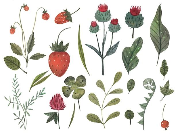 Grande morango aquarela mão desenhada conjunto com ramos, folhas, frutos, trevo, flores de bardana da floresta.