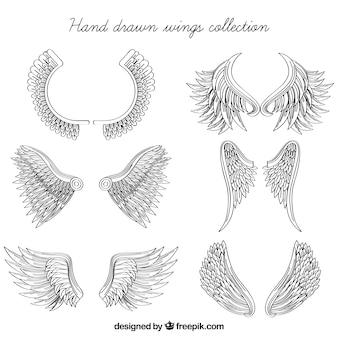 Grande pacote de asas desenhadas à mão