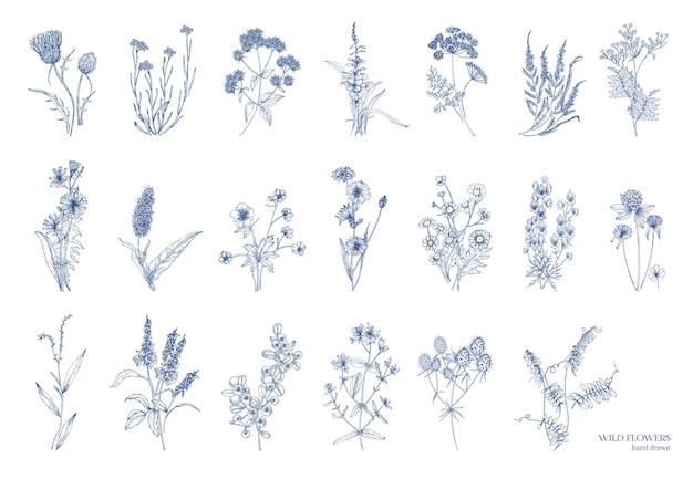 Grande pacote de elegantes ervas selvagens isoladas no fundo branco. plantas com flores herbáceas desenhadas à mão por linhas de contorno. ilustração vetorial detalhada natural.