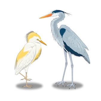 Grandes aves selvagens que vivem perto da água
