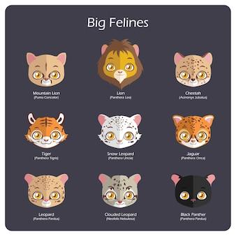 Grandes retratos felinos com nomes regulares e científicos