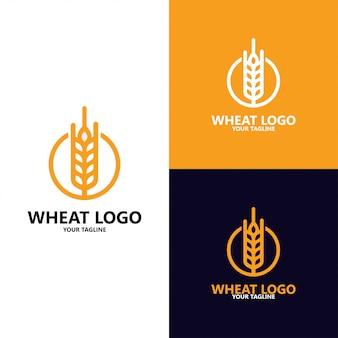 Grão de luxo, agricultura trigo grão logo template vector ícone do design