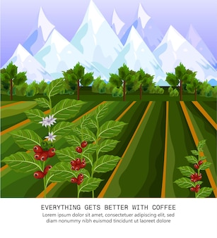Grãos de café crescendo na fazenda. campos de colheita ilustrações vetoriais