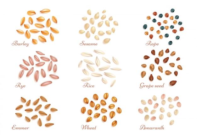 Grãos de cereais realistas e conjunto de vetores de sementes de óleo